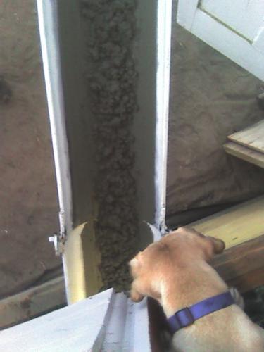 Goldie waching concrete go down chute