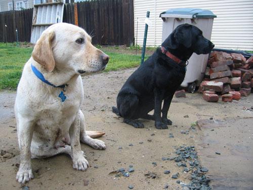 Wet wet dogs