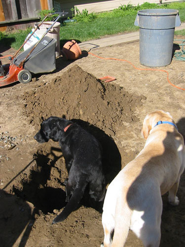 dogs in the hole