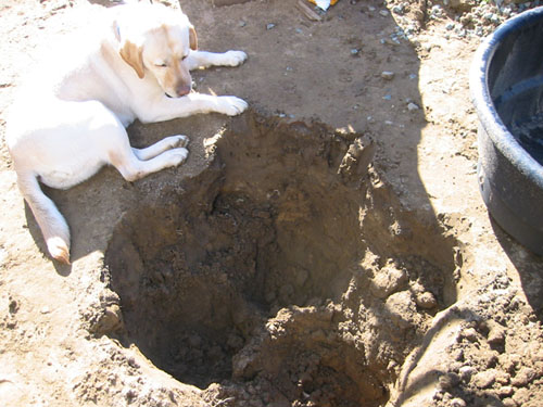 dog and hole