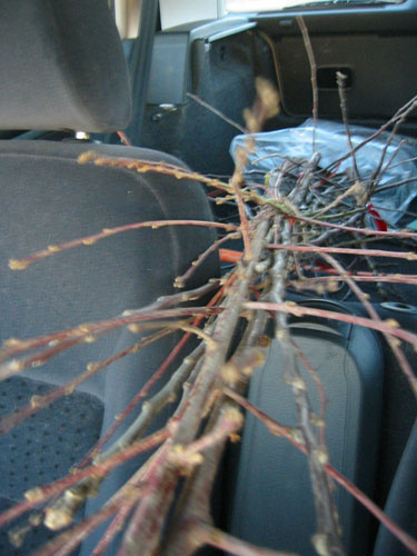 Trees in the car