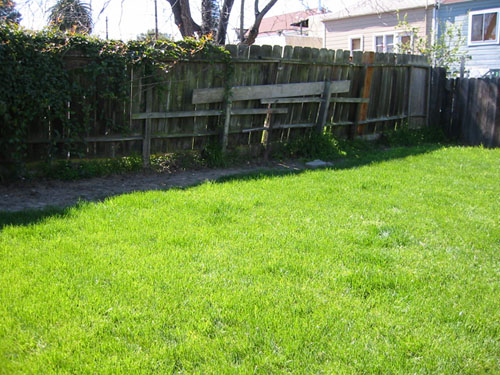 The ugly back fence