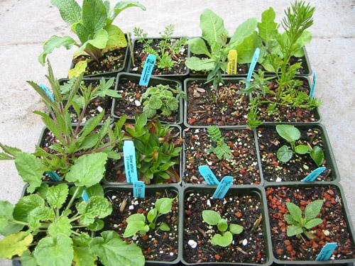 Flat of plants