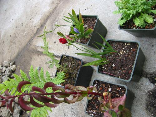 Extra plants