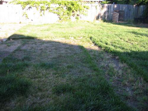 Greening lawn