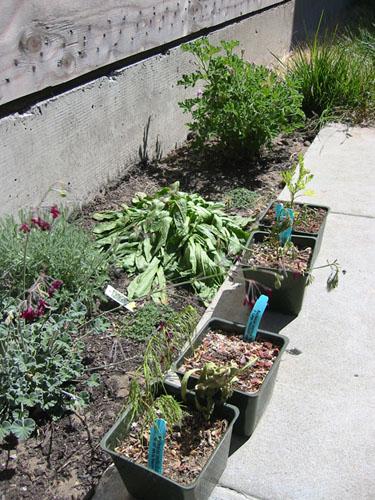 More dead plants