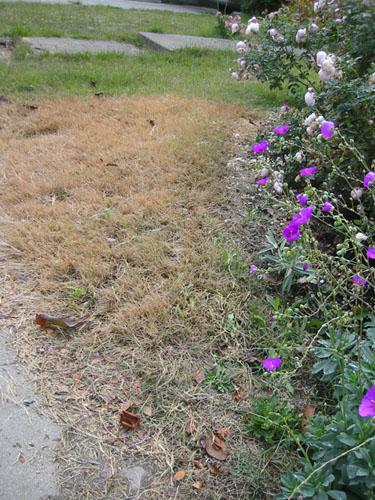 More dead grass