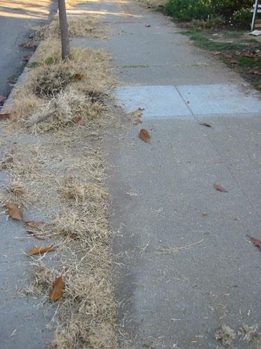 Sidewalk cleanup