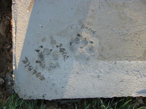 Dog paw prints