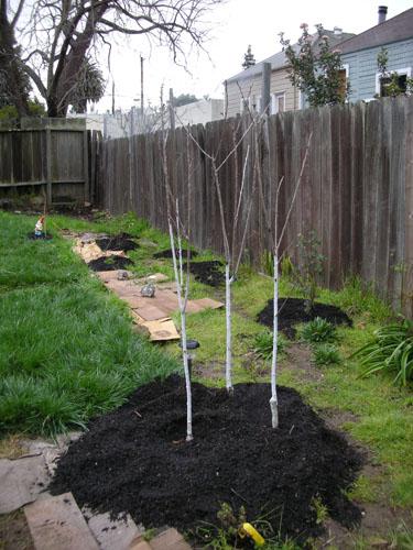 Compost around trees