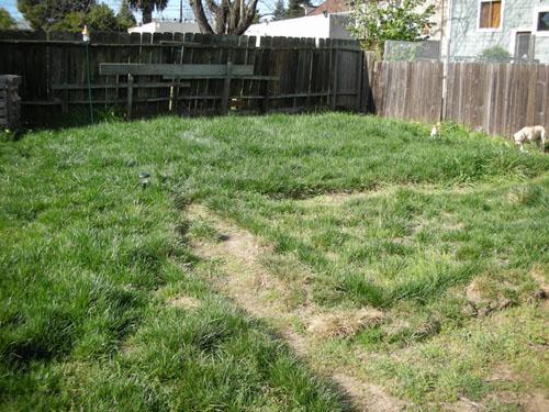 Long long grass