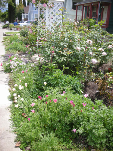 Native plants bed
