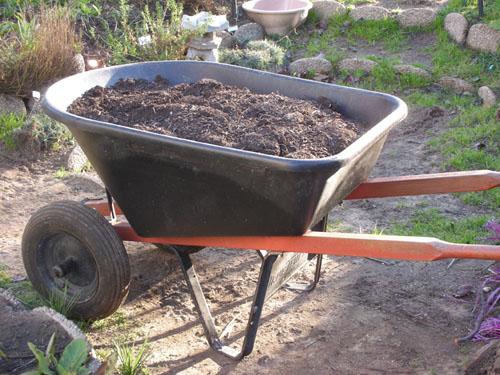 Wheelbarrow of compost