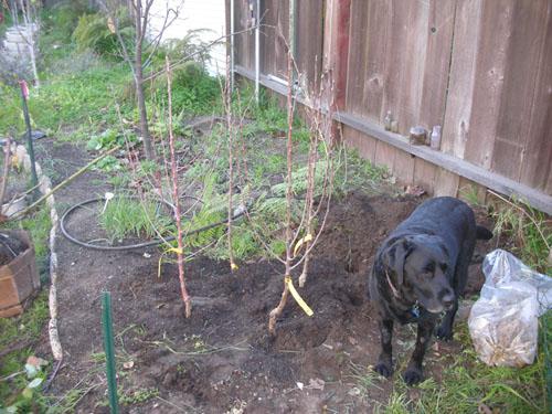 Nice new planting