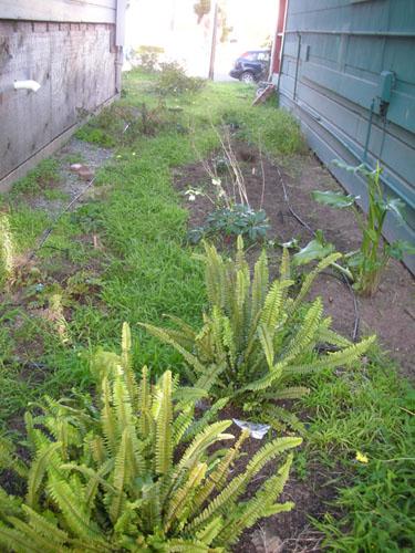 Fern Walk weeding work