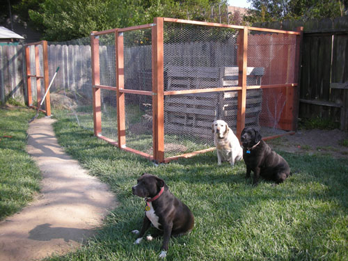 Dogs pose with chicken yard