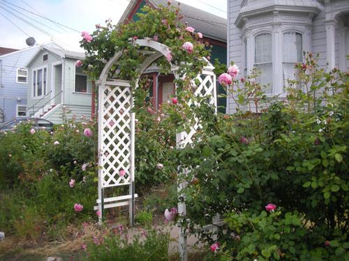 Rose arbor in bloom