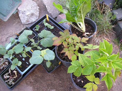 Plants from K&J