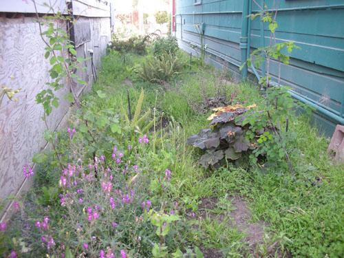 Fern Walk, overgrown