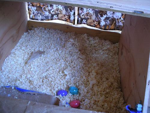 Inside the nest box