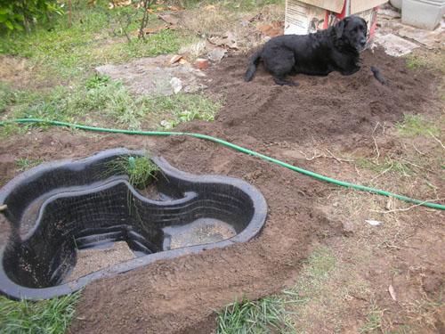 Rosie in a fresh pile of dirt