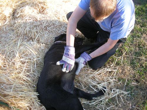 Checking the dog harvest