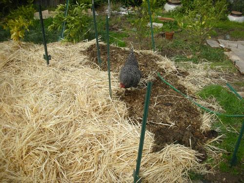 Installing posts in the garden