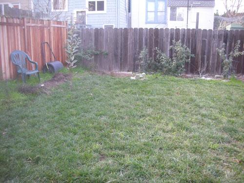 Far back yard