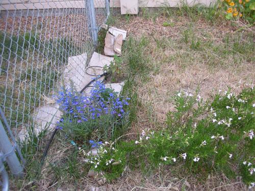 Driveway garden in flux