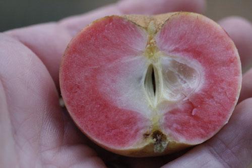 Pink Surprise insides