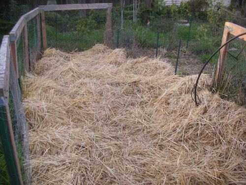 Hay in the vegetable garden