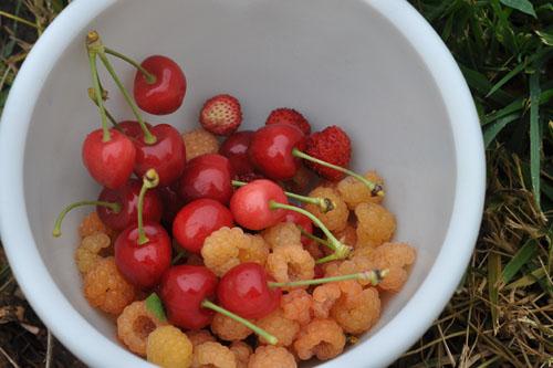 Cherries, raspberries, and alpine strawberries