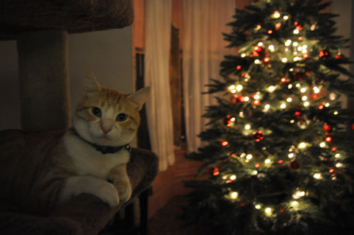 Mr Kitty and the tree
