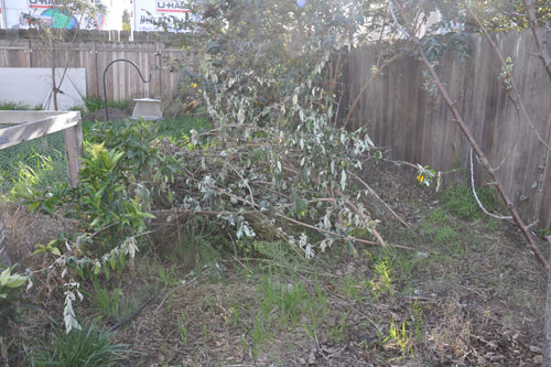 Orchard pile, before