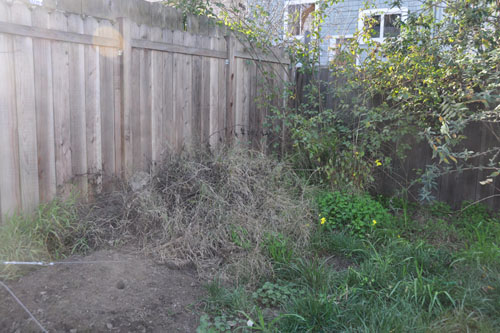 Old brush pile, before