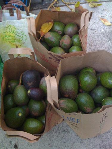 Three sacks of avocados