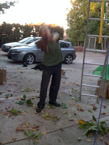 Noel catching avocados