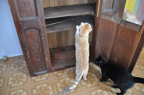 Mr Kitty and Dash help me examine the interior of the cabinet