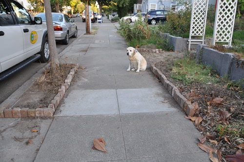 Goldie and the brick edging