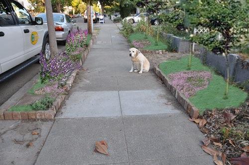 Front walkway plan