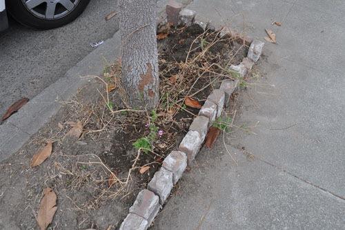 Tree spot