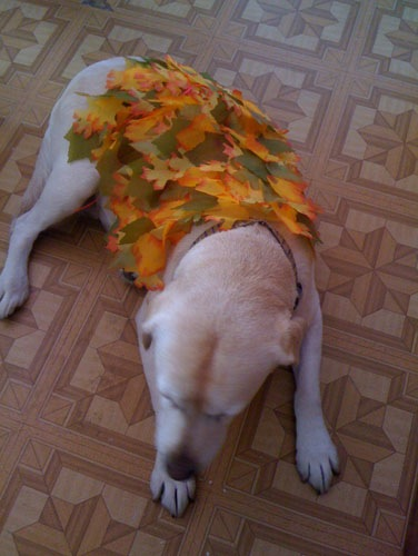 Goldie was a pile of leaves