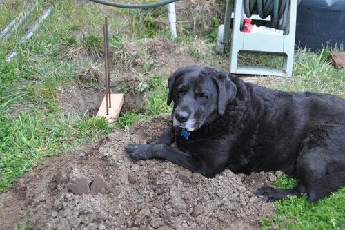 Rosie in the dirt pile
