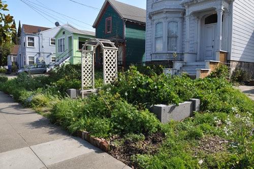 The front garden before gardeners