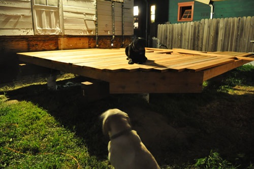 The dogs try out the deck