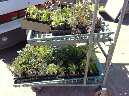 Cartload of plants at Annie's spring party