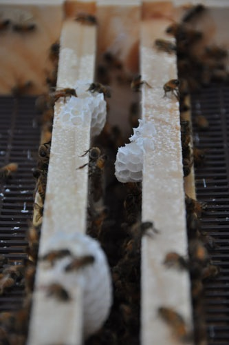 Building comb in the entrance to the top feeder