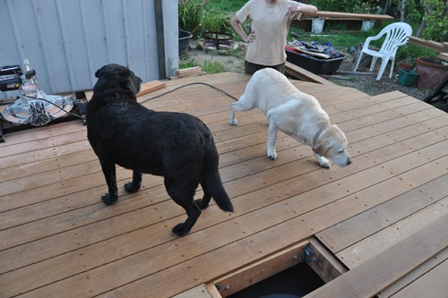 Quality assurance team inspecting the deck