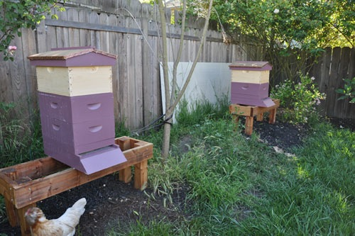 Hives with new feeders