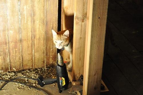 Heat gun and cat